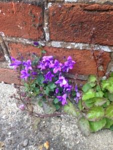 vagabond flora